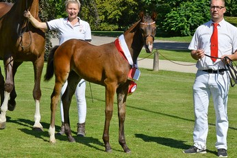 Dressage Filly Foal of the Year: Vilard's Frina by Franklin x Blue Hors Don Romantic.